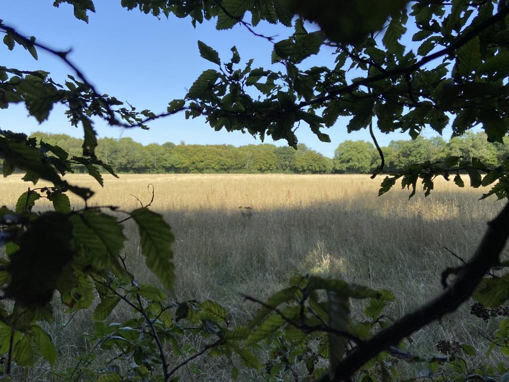 Agricultural Land - Sevenoaks Area